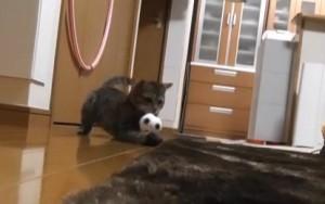 gatto-portiere-300x188